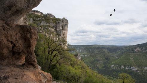Parc-naturel-regional-des-grands-causses-randonnée-pédestre-baume-et-falaises-du-Boffi-escalade-viaferrata-gorges-de-la-Dourbie-forêt-domainiale-causse-noir-gîte-de-charme-le-colombier-saint-véran-Aveyron