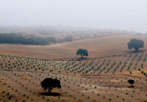 mit einer herrlichen Aussicht über die Felder