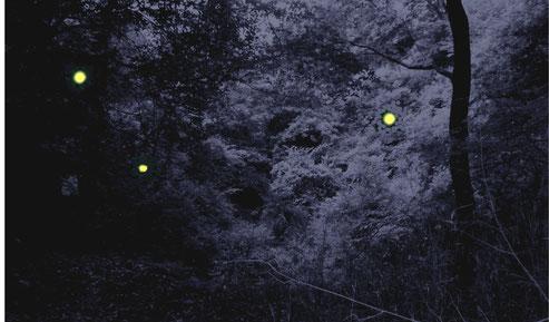 石澄川のホタルの合成イメージ写真(現地の昼間の写真を暗くし、ホタルの光のイラストを合成)