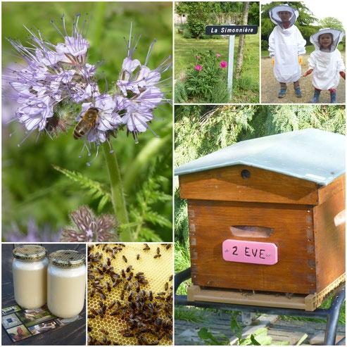 La récolte de miel de printemps est là. Lors de votre visite, vous pourrez en acheter après l'avoir goûter au petit déjeuner.