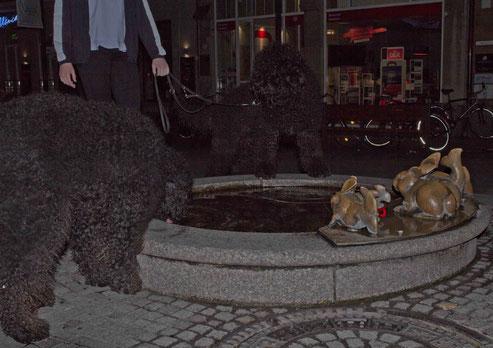 Beau und Jacko abends nach der Ausstellung in der Fußgängerzone. Fotoqualität ist leider grottenschlecht, aber lieber ein schlechtes Foto als gar keins.