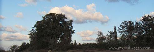 облака над лесом