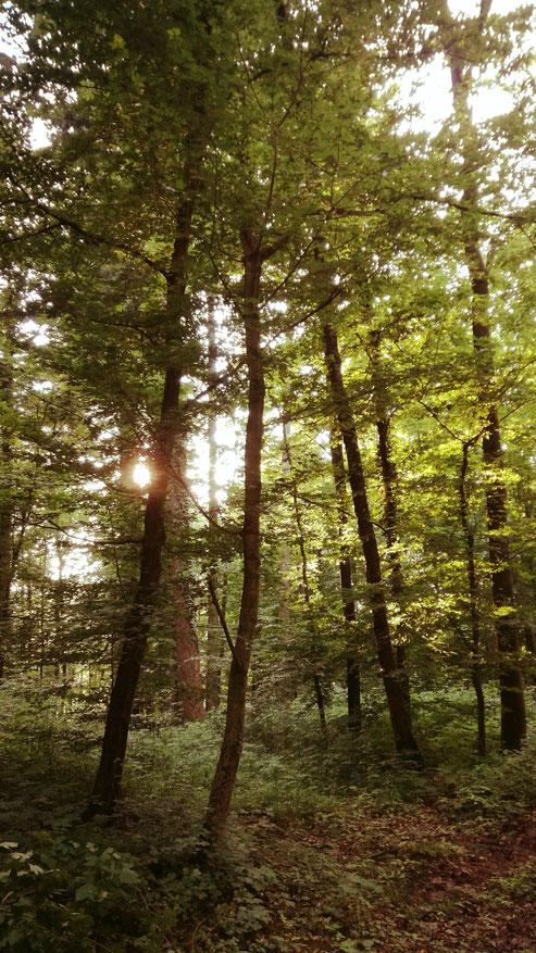 Heute habe ich drei Bilder für Euch  : Der Wald badet im Sonnenlicht ...