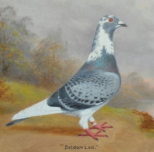 Andrew Beer Racing Pigeon:  'Seldom Led'