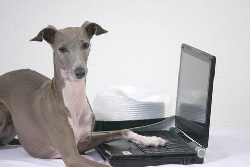 パソコンと犬