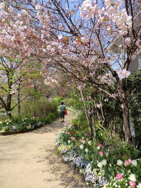 4月8日(2014) 花におおわれた道:京王フローラルガーデン アンジェにて