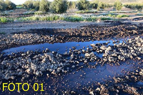 Terra saturat per l'abocament descontrolat d'oliasses, Abocades en un camp agrícola, amb el sistema de buidatge, prop del mas de l'Aranyó