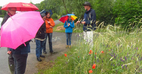 Bunte Vielfalt am Acker: sowohl die Regenschirme der Teilnehmer als auch die Blütenvielfalt im Roggenacker