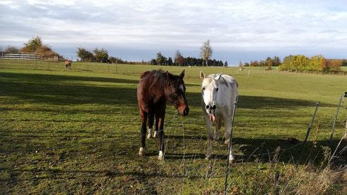 Pferdefreundschaften bis in den Tod, Beziehungen zwischen Pferden, mit Pferden bewusst leben