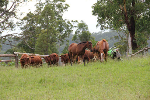 Pferdefreundschaft, Freundschaften zwischen Pferden, Herdenmanagement, Pferdestall, Stallwechsel, bewusstes Leben mit Pferden