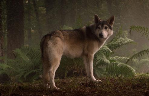 Warum ist die Prinzessin so haarig? Weil Arya ihrem Schattenwolf den Namen der berühmten Prinzessin gab.