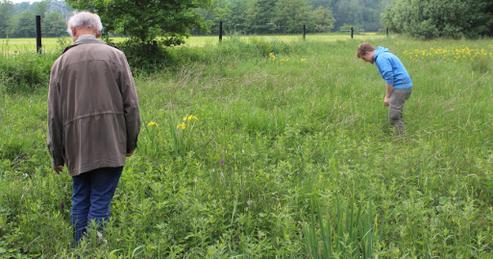 Reinhold Bleckmann (links) und Christopher Reith beim Auszählen der  Knabenkräuter auf der orchideenreichen Feuchtwiese bei Roxel