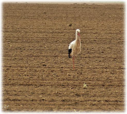 Dieser Storch macht gerade eine Pause