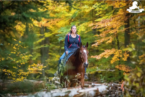 Freiarbeit, Horsemanship, freies Reiten, Wald, Ausreiten, Warmblut