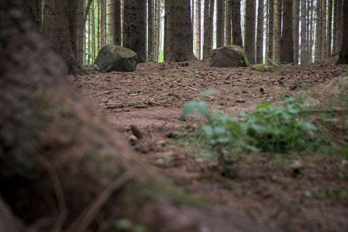Steinkreis pöglitz mecklenburg vorpommern stralsund rostock greifswald richteberg franzburg heimatlicht fotografie geschichte heimat radwandern