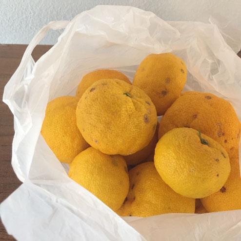 お客様の家で採れた柚子♪ 柚子風呂で楽しんでおりやす♪