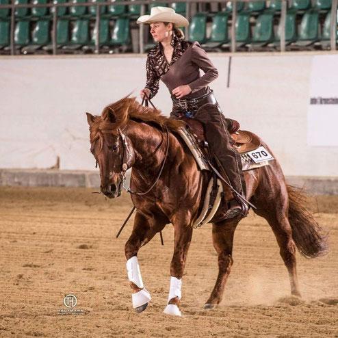 Gwhiz im smart Quarter Horse Hengst - Spook - Roxxter mit Ines Werner