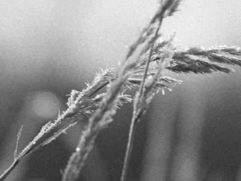 Bildausschnitt: Gräser in der Steinheide. Naheinstellung mit dem 4.5/21 cm HELIAR. Foto: bonnescape.de