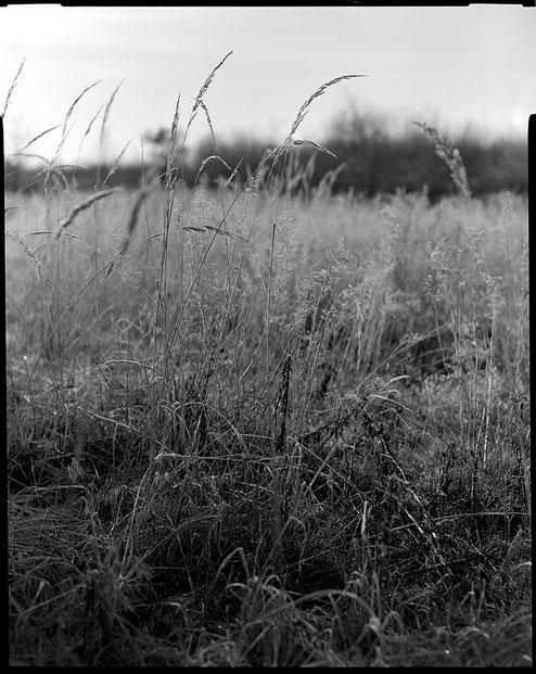 Großformatfotografie: Gräser in der Steinheide. Naheinstellung mit dem 4.5/21 cm HELIAR. Foto: bonnescape.de