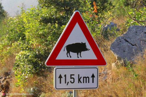 Wildschwein Strassenschild - Lifetravellerz Roadtrip - Kitespotguide Kroatien