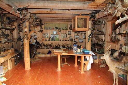 Das Schneckenhaus ist reichhaltig ausgestattet mit Anschauungsmaterial - Tiere und Pflanzen des Waldes