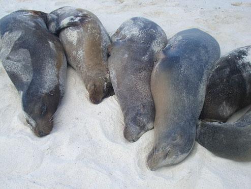 Faulenzen auf den Galápagos Inseln ist viel zu schade, man kann viel verpassen!