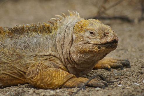 Kreuzfahrten, Island Hopping oder Hotel Programm auf den Galápagos Inseln mit ECUADORline