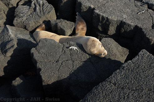 Auch die kleinsten Tiere werden auf den Galápagos zu wahren Stars