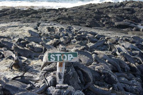 Auf einer Kreuzfahrt durch die Galápagos Inselwelt fühlt man sich in Urzeiten versetzt
