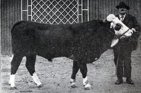 Livre d'Elite de la race bovine d'Abondance 1925 - Coquet , 2 ans, appartenant à Jean-François DESBIOLLES à Reignier (Haute-Savoie)