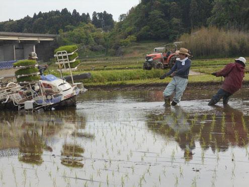 山裾の田んぼは膝下ぐらいの深さの田んぼが多く田植機が沈んでしまうことも良くあります。その都度引っ張り上げるなど、本当に大変です。
