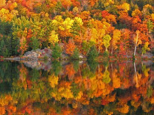 「秋は2番目の春。葉が全て花になる。」 ― Albert Camus