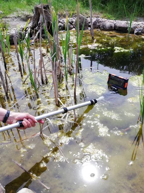 Einsatz der Unterwasserkamera, um die Kaulquappen zu filmen