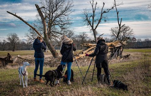 Fotoworkshop und Fotoreise mit Hund