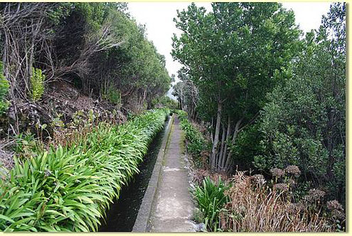 Agapanthus Büsche an der Levada do Norte