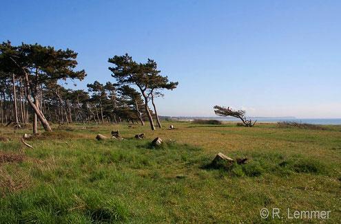 Reersø - die Haupt Windrichtung dürfte klar sein