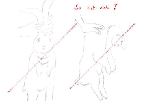 Bitte das Kaninchen niemals an den Löffeln oder an der Haut im Nacken greifen, denn es tut ihm weh! / Zeichnung Tanja Behrens