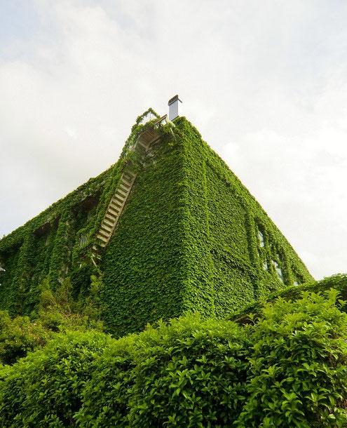 5月14日(2013) 緑におおわれた建物(井の頭自然文化園、熱帯鳥温室の外壁:武蔵野市)
