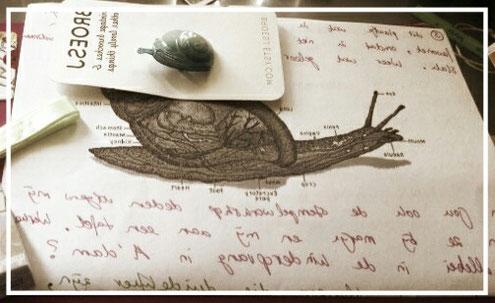 Slakkenpost.Papier.S.post