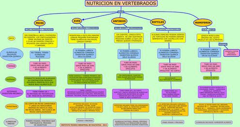 MAPA NUTRICIÓN EN VERTEBRADOS