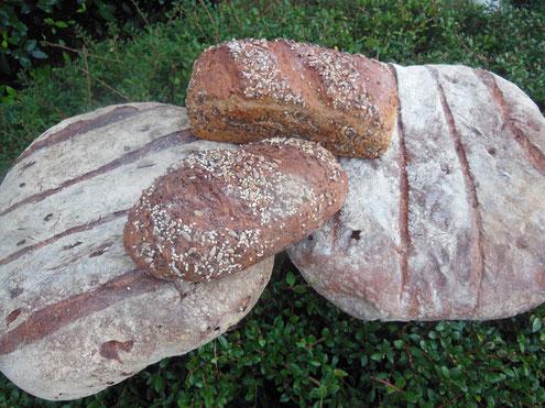 Brot ist ein gesundes Lebensmittel, auch für Schwäne und andere Wasservögel.