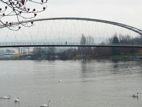 Filigrane Brückenkonstruktion in der Fluglinie der Wasservögel.