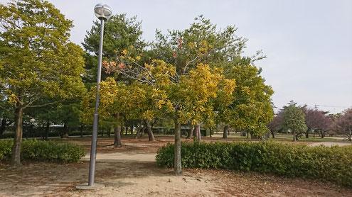 三重県松阪市 鈴の森公園