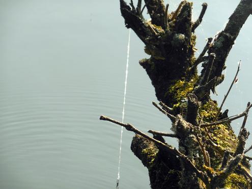 Angelleine hängt mit Angelhaken an einem Baumstumpf.
