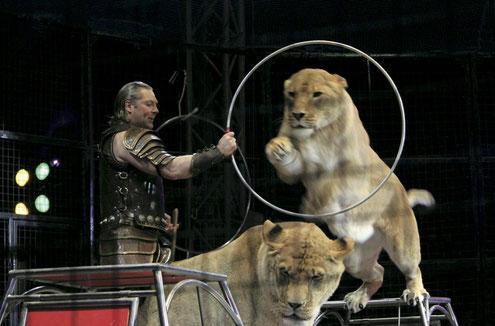 ライオンたちが飛び跳ねる「奇跡のホワイトライオン世界猛獣ショー」(木下サーカス提供)