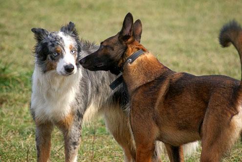 Les TOC de l'homme et du chien
