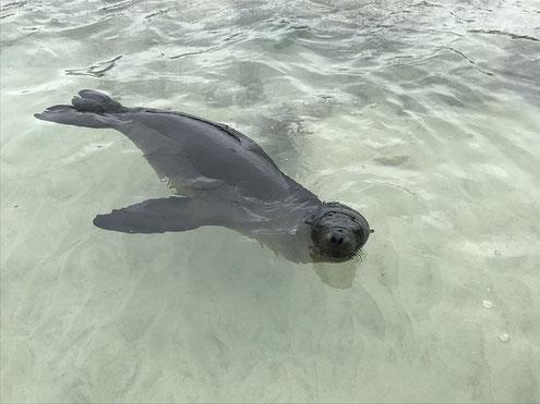 Die Galápagos Inseln erkunden mit ECUADORline