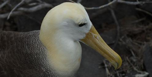 Insel Espaniola, Galapagos, Covid 19