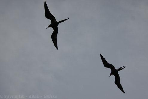 Die Galápagos Inseln sind ein Vogel-Paradies