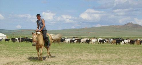 Ziegenherde in der Mongolei, aufgenommen von ritsch-ratsch